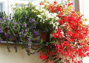 sommerbepflanzung balkon 02 blumenkasten in farben blau With markise balkon mit tapete orange weiß