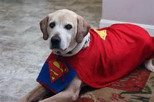 Super Dog!   Great Landings