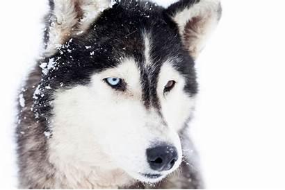 Dog Breeds Names Breed Husky Origins Dogs