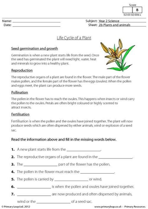 primaryleap co uk cycle of a plant worksheet
