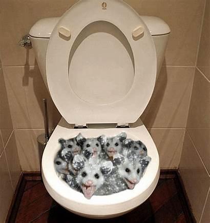 Toilet Surprise Sweet