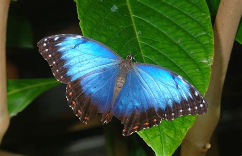 ohio woman arrested  stealing rare butterfly complex
