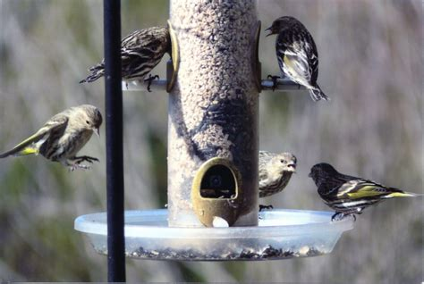 Backyard Bird Shop Locations by What S The Best Seed To Put In My New Bird Feeder