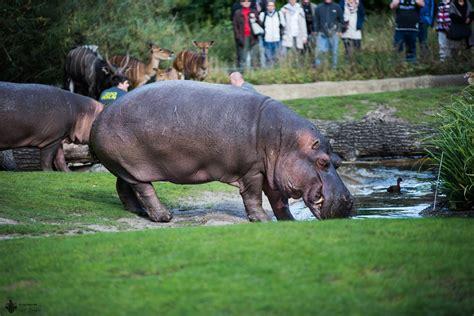 Zoologischer Garten Potsdam by Zoo Berlin Zoologischer Garten