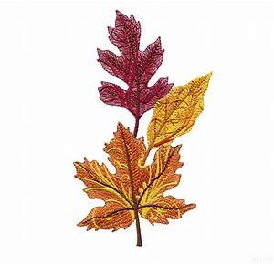 Single Leaves Pictures - ClipArt Best