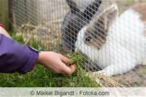 Kaninchengehege Bauen Innen : kaninchengehege selber bauen anleitung ~ Frokenaadalensverden.com Haus und Dekorationen