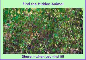 Can You Find Hidden Animals