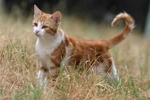 My other MorningClan OC: Blazepaw. She's a tabby she-cat ...