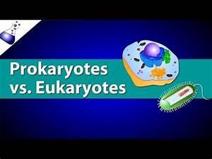 Prokaryotic Vs  Eukaryotic Cells Video For 9th