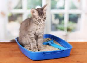 how to litter a cat 5 ways to improve cat litter longevity during winter catster