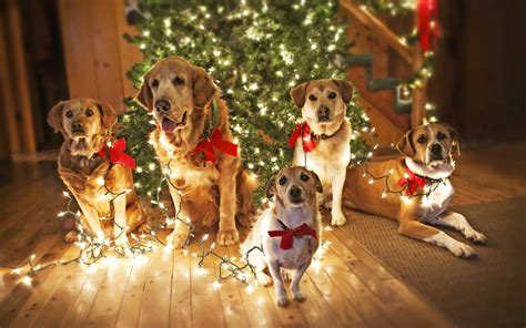 holiday safety tips for your pets inside dogs world