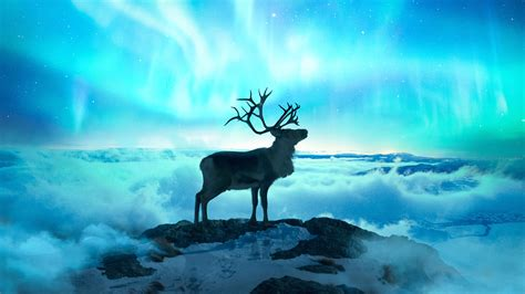 Reindeer Wallpaper Hd by 1360x768 Reindeer Laptop Hd Hd 4k Wallpapers