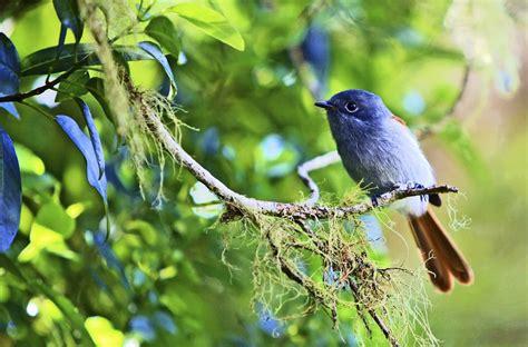 Serre Oiseau by Les Oiseaux De La R 233 Union Ile De La R 233 Union Tourisme