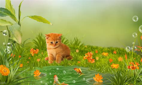 Animal Pictures For Wallpaper - animals wallpaper collection for free
