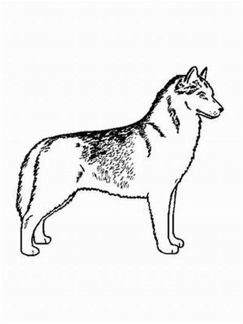 hund siberian husky ausmalbild malvorlage hunde
