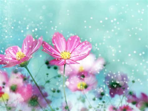 Most Beautiful Nature Flower Pics Hd Wallpaper ...