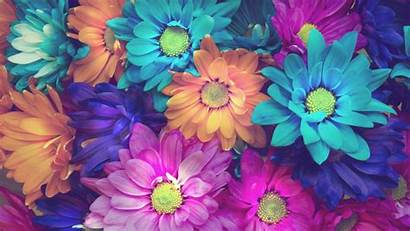 Flowers Colorful Petals Wallpapers Resolution 4k 1325