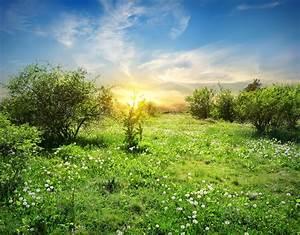 Wiese Mit Blumen : sonnige wiese mit blumen stockbild bild von l wenzahn ~ Watch28wear.com Haus und Dekorationen