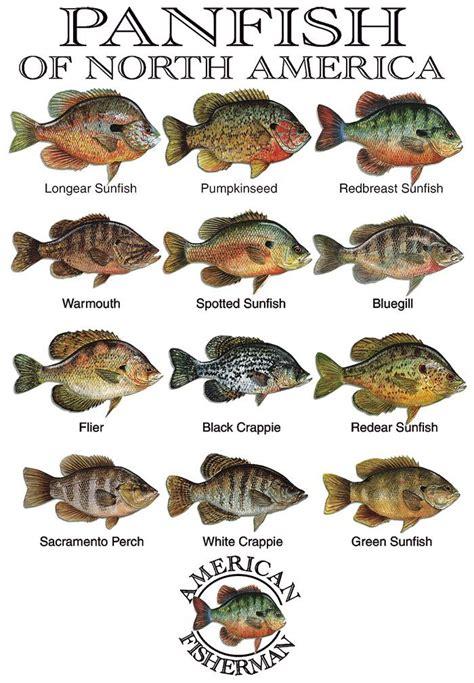 panfish  north america bass fishing alaska salmon