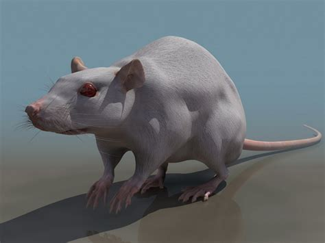 Laboratory rat 3d model 3D Studio files free download