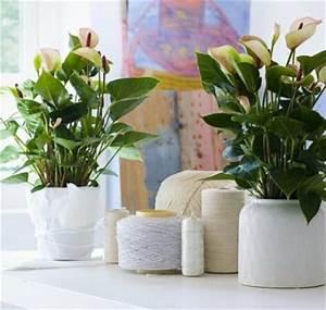 Pflegeleichte Zimmerpflanzen Mit Blüten : sch ne zimmerpflanzen moderne pflegeleichte topfpflanzen ~ Eleganceandgraceweddings.com Haus und Dekorationen