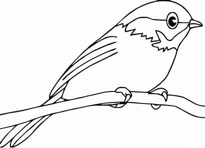 Bird Coloring Pages Robin Template Birds Drawing