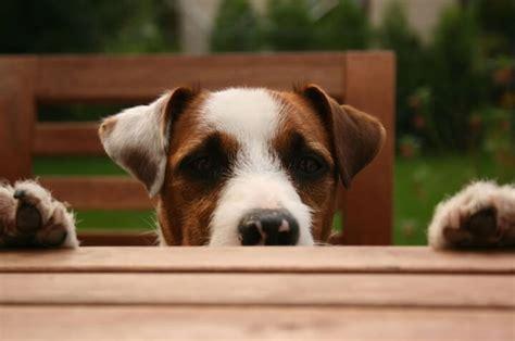 gesunde ernaehrung fuer hunde das richtige hundefutter ist