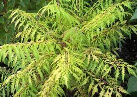 Kübelpflanzen Winterhart Schattig : vier sommergr ne winterharte k belpflanzen auch f r ~ Michelbontemps.com Haus und Dekorationen