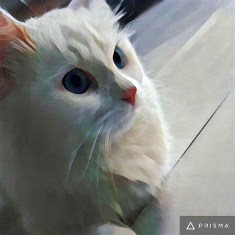 Lion Cat Artwork Hd Wallpapers Desktop And Mobile