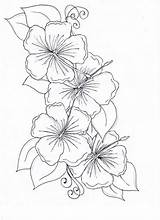 Flower Hibiscus Drawing Coloring sketch template