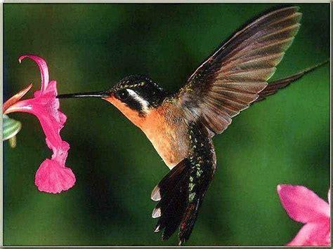 mylifehim humming birds  dragonflies
