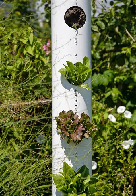 Vertical Garden Pipe by 6 Ideas To Save Space By Vertical Garden Outdoortheme