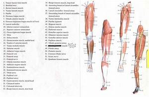 16 Best Anatomy Images On Pinterest