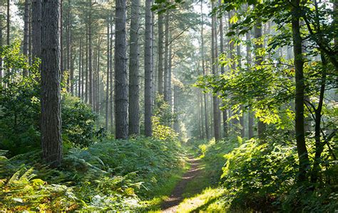International Day Of Forests 6 Reasons To Go For A Walk
