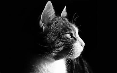 Cat Profile Face Cats Background Nose Medium