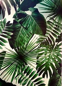 The 25+ best Tropical wallpaper ideas on Pinterest ...