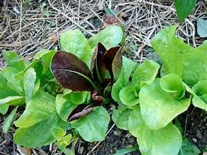 Quel Legume Planter En Septembre : quels l gumes planter apr s les r coltes de l t ~ Melissatoandfro.com Idées de Décoration