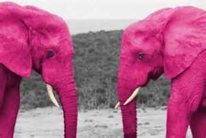 temporada de elefantes rosados noticias de buenos aires