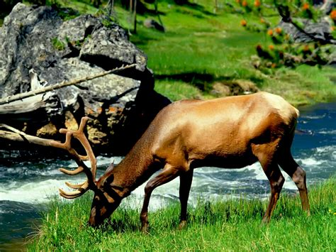 Download Free Wallpapers Wild Animals Wallpapers