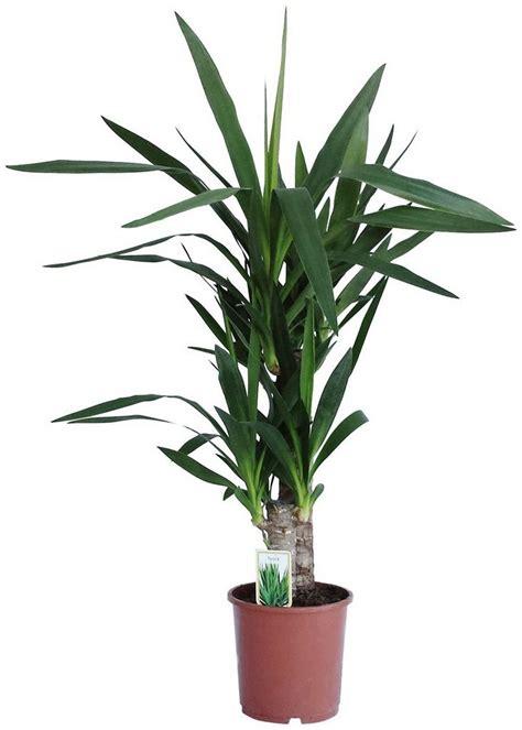 pflanze mit a pflanze mit c f r stadt land fluss fleischfressende pflanze sonnentau 1 pflanze