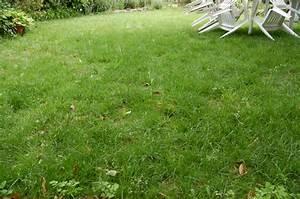 comment refaire une pelouse abimee conseils coaching With comment refaire son jardin