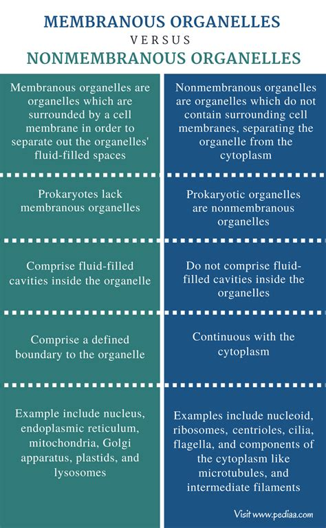 difference  membranous  nonmembranous organelles