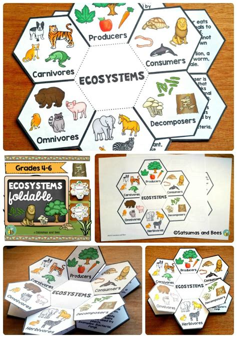 "This ""ecosystems"" Foldable Will Help Your Students"