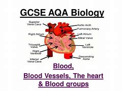 Images for gcse heart diagram desktophddesignwall3d hd wallpapers gcse heart diagram ccuart Image collections