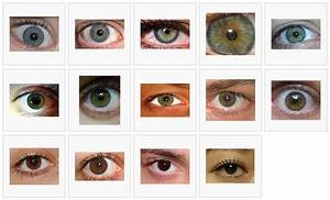 Green Eye Color Chart | ... Eye Color Chart , Different ...