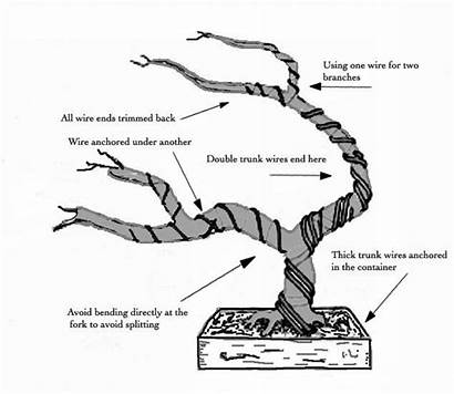 Bonsai Tree Wiring Wire Plants Trees Pruning