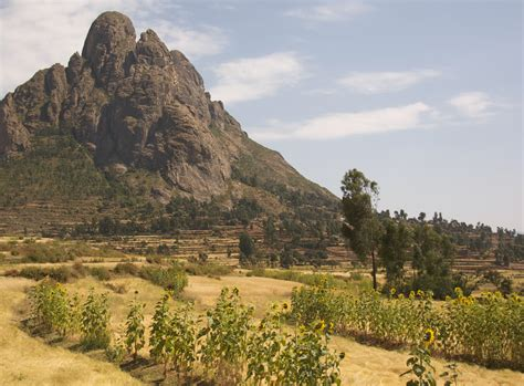 File:Landscape With Sunflowers, Tigray Region, Northern ...