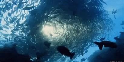 Ocean Planet Trailer