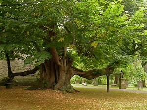 Grenzabstand Bäume Nrw : kirchlinde reelkirchen alte b ume in lippe nrw niedersachsen ~ Frokenaadalensverden.com Haus und Dekorationen