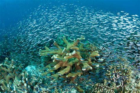 Diving Banda Neira, Moluccas - WWF Coral Triangle Blog